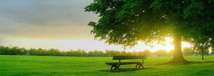 385594-bench-green-park-swish_death