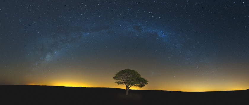Star scape with lone tree brown grass and Milky Way and soft lig