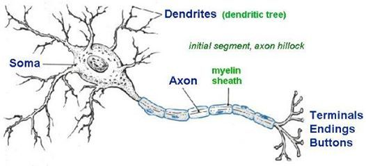 Nerve Cell_02